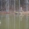 automatic swan feeder