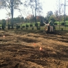 turf-renovation-incorporating-the-soil-amendments-into-the-soil