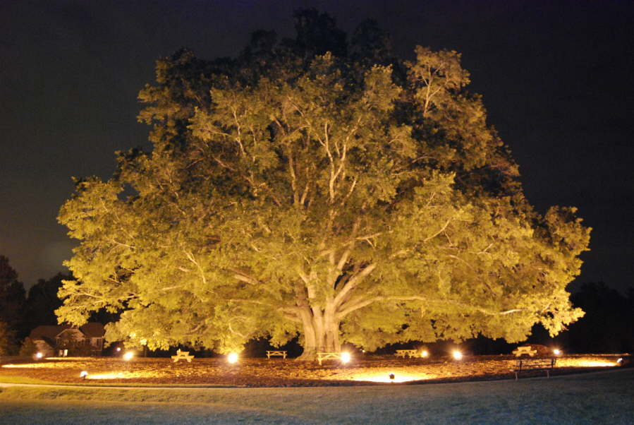 landscape lighting. largest uplit tree in NC. largest uplit tree in NC & Landscape Lighting - Outdoor Contracting azcodes.com