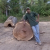 large oak tree log