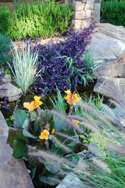 aquatic landscaping