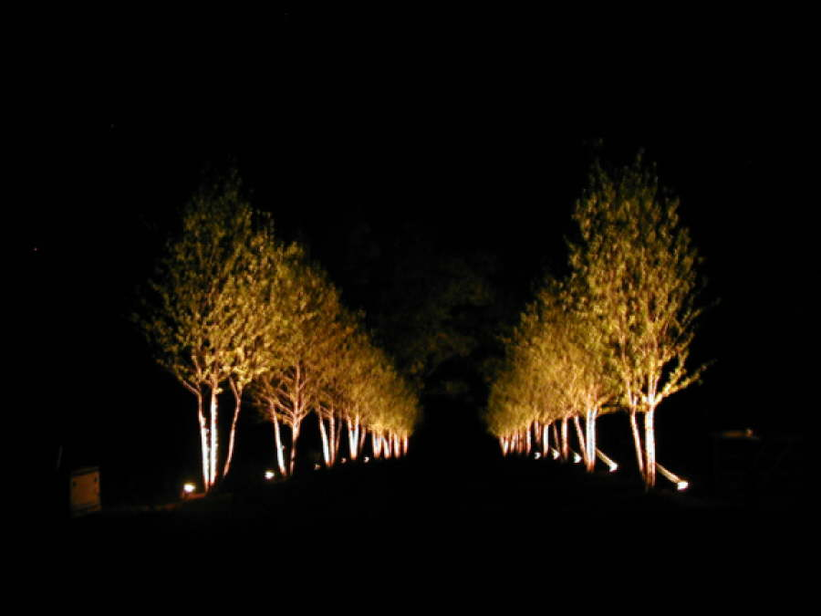 Outdoor Lighting Trees Low voltage landscape lighting for trees landscape lighting ideas landscape lighting outdoor contracting workwithnaturefo