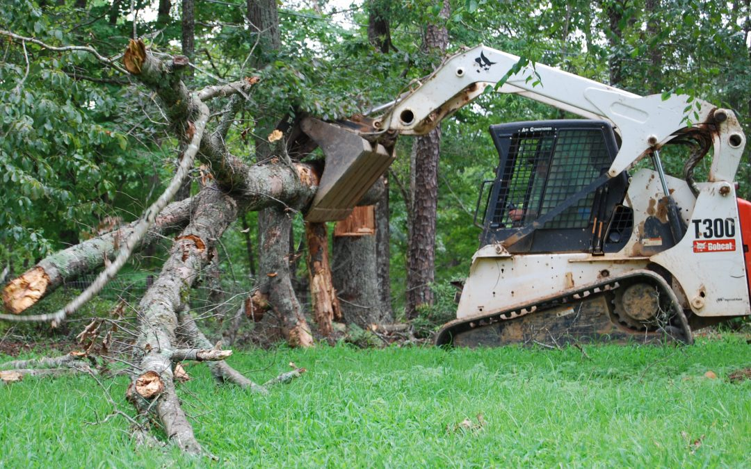 Tree removal and pruning services – Outdoor Life, Inc.
