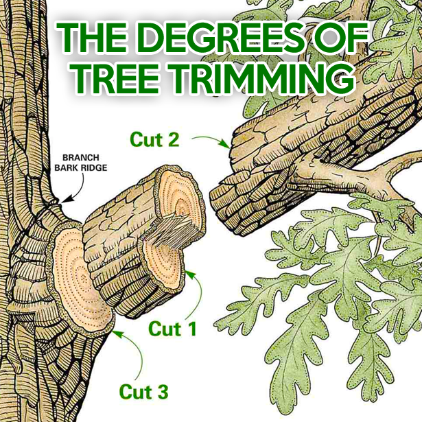 The Degrees of Tree Trimming - Outdoor Life Inc. #landscapingservices