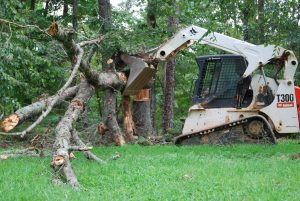 Tree Pruning and Removal Services