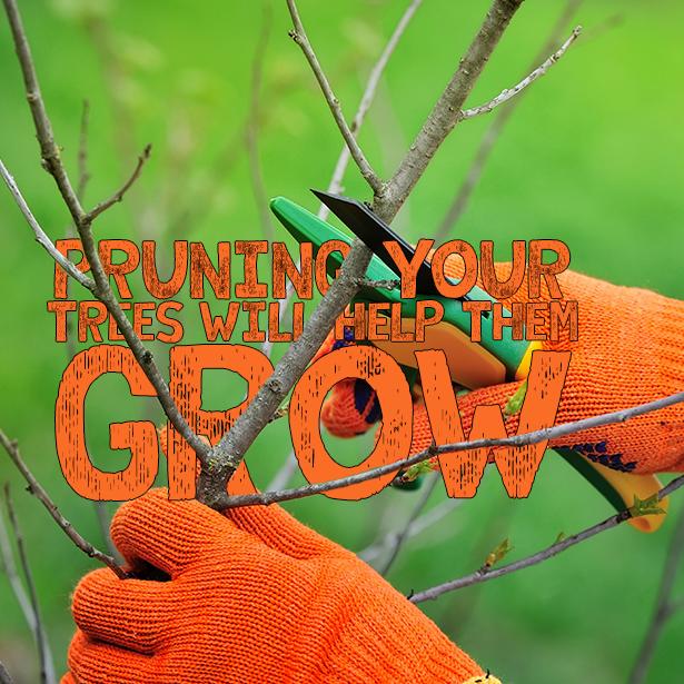 Tree Pruning – Show Some Love #TreePruning