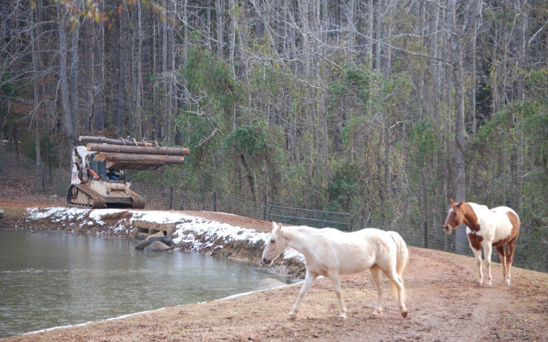 Arborist Work On Farm – Equine Services