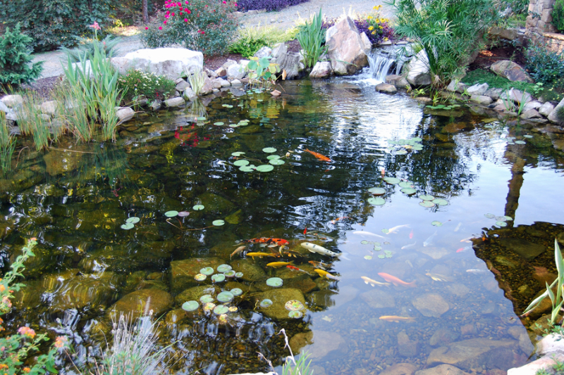 Koi Ponds Bring Beauty and Life To Your Landscape