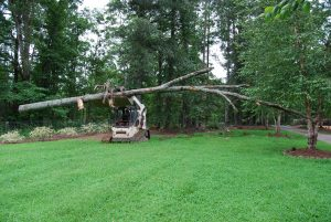 tree pruning and removal services 2