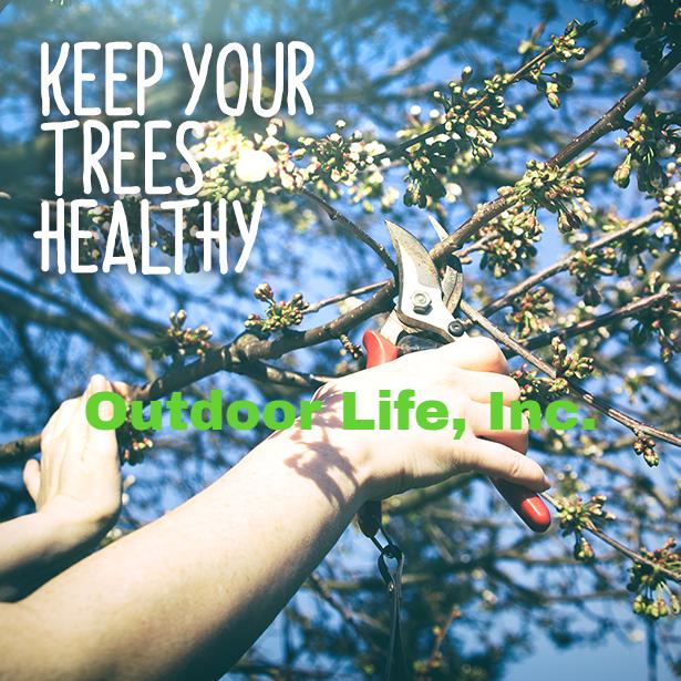 Keep Your Trees Healthy! Ourdoor Life, Inc.